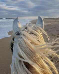 PORTUGAL Fancy a beach ride in Portugal? Checkout Equitrekking T… - Best Equitation Horse All The Pretty Horses, Beautiful Horses, Animals Beautiful, Cute Horses, Horse Love, Animals And Pets, Cute Animals, Beach Rides, Horse Ears