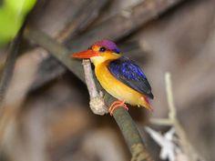 Wildlife Sanctuaries in Kerala, Forests in Kerala, National Parks in Kerala, India