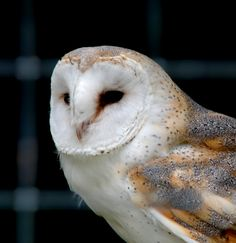 owls owls owls!! i love them<3