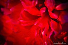 Flower Photography Fine Art Photography by LocustGrovePhotos