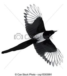 Magpie Drawing <b>magpie</b> illustrations and clip art. 259 <b>magpie</b> royalty free ...