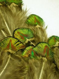 Small Green and Gold  Peacock Scallop Plume Feathers by pegasus22, $6.00