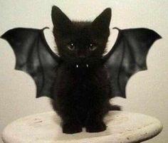 El hijo de batman y catgirl jjj
