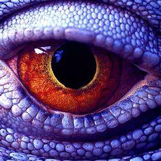 Macro shot of a lizard's eye. Les Reptiles, Reptiles And Amphibians, Reptiles Preschool, Lizard Eye, Reptile Eye, Regard Animal, Realistic Eye Drawing, Eye Close Up, Dragon Eye