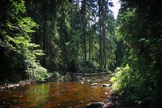 latvia forests - Google Search