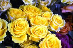 Yellow Roses | Flickr - Photo Sharing! #yellowroses