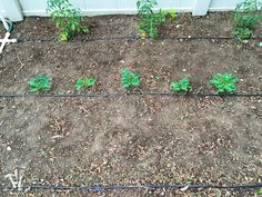 Ever wondered how to install a drip watering system for the garden? It is really easy to do and makes watering your garden so easy. Drip Watering System, Drip System, Water Systems, Irrigation, Garden Inspiration, Outdoor Decor, Easy, Gardening, Check
