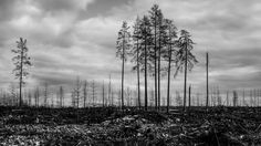 Wildfire Forest fires BW 1 by reidarmurken