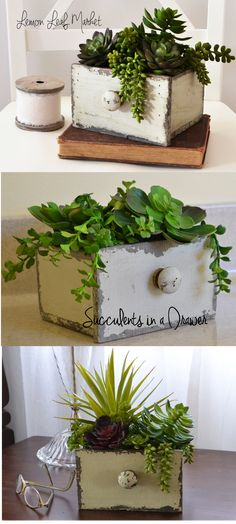 Cute little vintage-style drawer of faux succulents