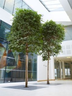 Atrium garden on the groundfloor of the donelly centre for cellular and biomolecular research - Wintergarten ffb ...