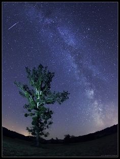 The Milky Way and a bright meteor are captured in this wide-angle view from Zselic Dark Sky Park in Hungary. Dark Skies, Milky Way, Hungary, Northern Lights, Southern, Heaven, Trees, Earth, Sky