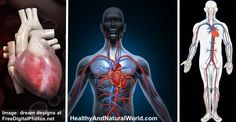 How to Improve Blood Circulation Naturally (Research Based)