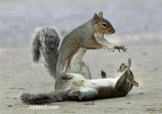 Touch my nut again . . .