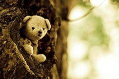 Hide and seek teddy bear.