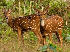Namdapha National Park - in Arunachal Pradesh, India