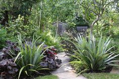 Long narrow woodland garden with Astelia chathamica standing sentinel of the pathway. Garden Ideas Nz, Garden Inspiration, Back Gardens, Small Gardens, Architectural Plants, Bush Garden, California Garden, Irvine California, Stipa
