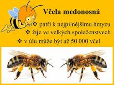 Výsledek obrázku pro život včely medonosné Bugs, Insects, Montessori, Animals, Bees, Animales, Animaux, Beetles, Animal