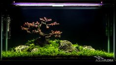The World's Best Photos of aquascaping and faao Glass Aquarium, Planted Aquarium, Aquarium Ideas, Aquascaping, Amphibians, Reptiles, Plantar, Water Plants, World Best Photos
