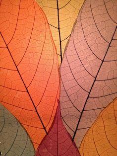 cocoa leaf illumination