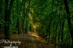 Magical Moment in the Woods by Martin Flashback / 500px