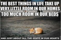 All Pet Hospital. Simple Tips To Help You With Cat Care. When cats aren't sleeping, they have to do something to pass the time. If left unchecked, cats tend to climb on furniture and scratch your belongings. I Love Cats, Cute Cats, Funny Cats, Funny Animals, Cute Animals, Animal Funnies, Adorable Kittens, Cat Quotes, Animal Quotes