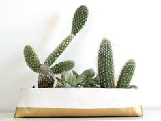 DIY עשה זאת בעצמך עציץ קקטוסים סוקולנטים מיס גרות צילום לירון גונן (20)