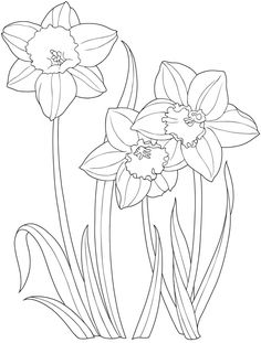 Welcome to Dover Publications - Creative Haven Garden Flowers Draw and Color / artwork by Marty Noble
