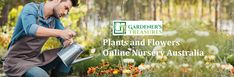 Gardener's Treasures is here for you. We have our own online nursery Australia where you can buy plants and flowers of your own choice. Whether you want to plant an Aloe, or a succulent; we have it all.