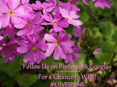 Hello Pinner!  In case you didn't already know, we are doing a Spring Promotion.  To enter, all you have to do is follow us on Pinterest and/or Google+ for a chance to win!  If you follow us, you're already entered into the promotion!  Follow us on both platforms for a better chance at winning! Click the Pin to bring you to our Google+ Page. Happy Pinning!!!