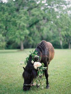 Every wedding needs a pony: http://www.stylemepretty.com/alabama-weddings/montgomery-al/2014/09/16/elegant-floral-filled-southern-garden-bridal-inspiration/   Photography: Ashley Kelemen - http://ashleykelemen.com/
