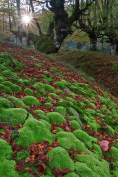 Gorbea Natural Park, Basque Country, Spain.