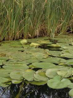 Lake at my dzialex