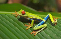 Costa Rica Reisen 2019 Regenwald Rundreisen buchen