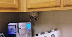 10+ ninja cats that have mastered the ancient art of ninjutsu: #cats #cattoyys #catowners