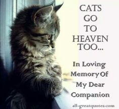All Cats Go To Heaven!