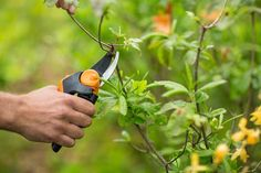 The Bypass pruners are used on plants with diameters measuring inches or less. Using this unit to cut through dead and hardwood branches will only damage them fast. - 12 Popular Cutting Tools for Gardeners - Little Plants, Small Plants, Types Of Plants, Best Garden Tools, Garden Tool Set, Trimming Hedges, Plant Classification, Pruning Tools, Plants