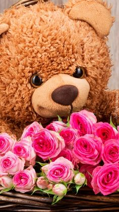 Best Wishes Messages, Love Flowers, Cards, Pictures, Animals, Catwoman, Teddy Bears, Wallpapers, Iphone