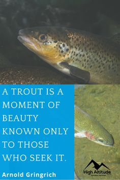 Seek for beauty. Best Fishing, Fishing Tips, Telescopic Fishing Rod, Fishing Equipment, Trout, In This Moment, Easy, Fishing Rigs, Brown Trout