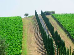 The Tuscany bike tour features a ride through the rolling hills of the Chianti Classic region. The cypress and olive trees create a beautiful landscape with an unbeatable view. Take a break at the historic castle of Castello di Brolio before finishing the evening with an intimate wine tasting and dinner.