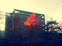 herfstkleuren #utrecht