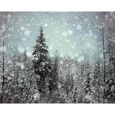 Winter Photograph, Christmas Artwork, Snowflake Photography, Black and... (1.940 RUB) ❤ liked on Polyvore featuring home, home decor, forest home decor, blue home decor, blue home accessories, black home decor and black home accessories