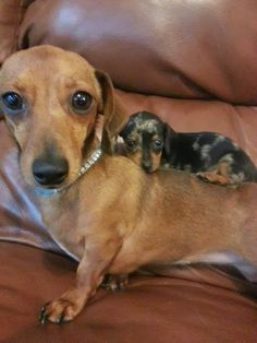 5 Most precious animal pics on internet ~ The Pet's Planet