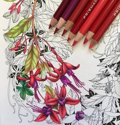 #thefloweryear by #leiladuly is absolutely stunning. WIP of the wild fuchsia page. . #coloring #colouring #adultcoloringbook #adultcolouringbook #coloriage