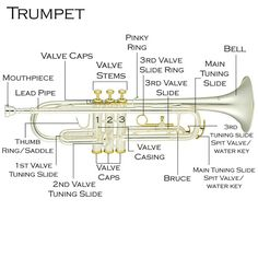 trumpet | Cecilio Trumpet Owner's Manual : Cecilio Musical Instruments ...