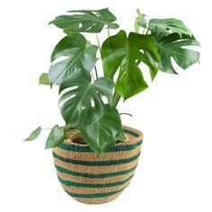 Dieser wunderschöne Sisalkorb ist ein Unikat in natur und Grüntönen. Er eignet sich besonders gut für Pflanzen, Gemüse, Wäsche, Wolle und und und.... Sisal, Wicker Baskets, Plants, Home Decor, Basket Quilt, Home Accessories, Nature, Nice Asses, Flora