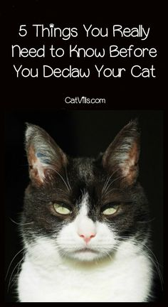 Can You Declaw A Cat In Pa