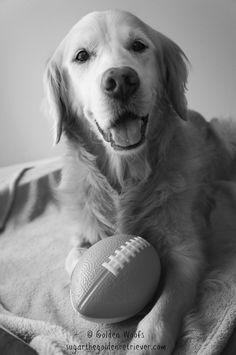 SUGAR Ready for Super Bowl Sunday