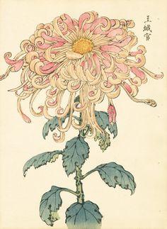 Keika Chrysanthemum Wood Block Prints 1893