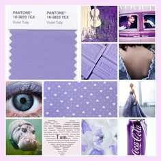 Violet Tulip Summer Love