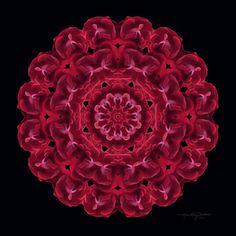 Red Rose Flower Mandala